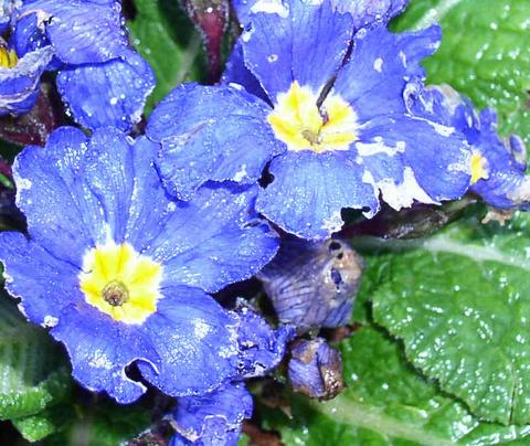 first_flower2004-thumb