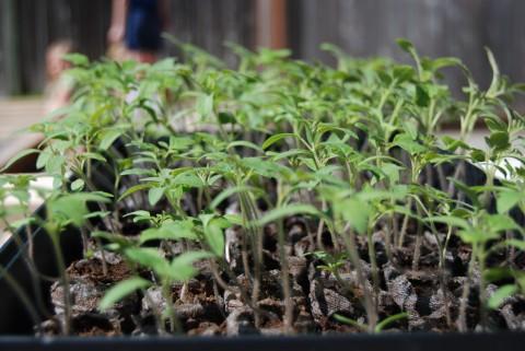 Grow, seedlings, grow!