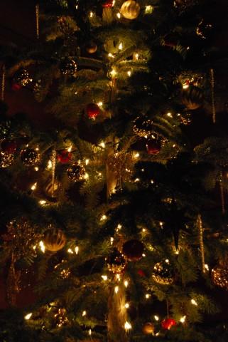 Refuge Christmas Tree